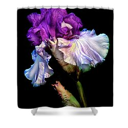Purple Iris Shower Curtain by Dave Mills