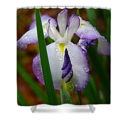 Purple Iris In Morning Dew Shower Curtain