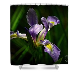 Shower Curtain featuring the photograph Purple Iris by Lisa L Silva