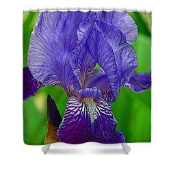 Purple Iris Shower Curtain by Lisa Phillips