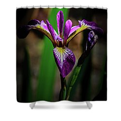 Shower Curtain featuring the photograph Purple Iris by Tikvah's Hope