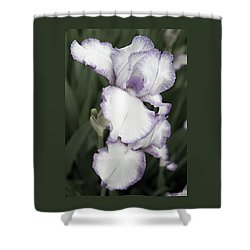 Purple Is Passion Shower Curtain by Sherry Hallemeier