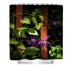 Purple Jackmanii Clematis Shower Curtain by Onyonet  Photo Studios