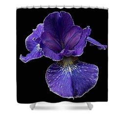 Shower Curtain featuring the photograph Purple Japanese Iris by Jean Noren