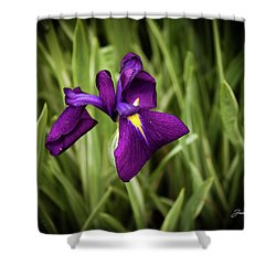 Shower Curtain featuring the photograph Purple Japanese Iris by Joann Copeland-Paul
