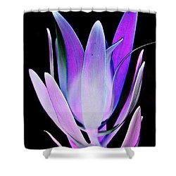 Shower Curtain featuring the photograph Purple by John Hansen