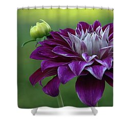 Purple Lady Shower Curtain by Patricia Strand