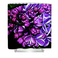 Purple Lilac Shower Curtain