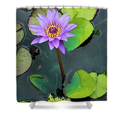 Purple Lilly With Lilly Pads Shower Curtain