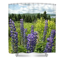 Shower Curtain featuring the photograph Purple Lupines by Paul Miller