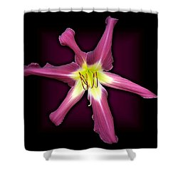 Purple Many Faces Daylily Shower Curtain by Tara Hutton