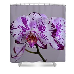 Purple Moth Orchid Shower Curtain