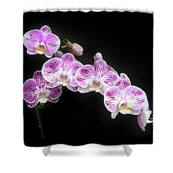 Purple On White On Black Shower Curtain