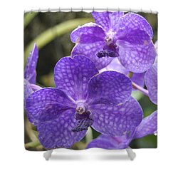 Purple Orchids Shower Curtain by Michael Peychich