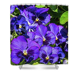 Purple Pansies In Morning Light Shower Curtain