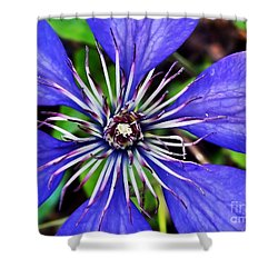 Purple Passion Shower Curtain by Christy Ricafrente