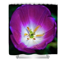Purple Perfection Shower Curtain by Tamyra Ayles
