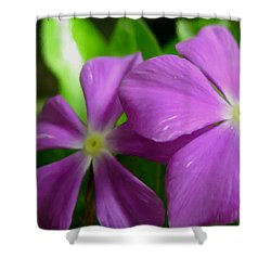Purple Periwinkle Flower Shower Curtain by Lanjee Chee