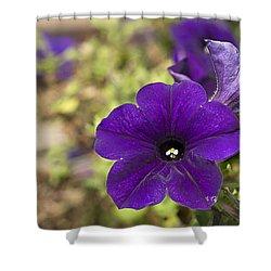 Purple Petunias Shower Curtain