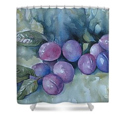 Purple Plums Shower Curtain