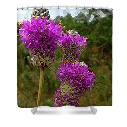 Purple Prairie Clover Shower Curtain