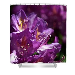 Shower Curtain featuring the photograph Purple Rhododendron by Baggieoldboy