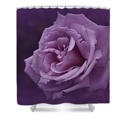 Purple Rose Of November Shower Curtain by Richard Cummings