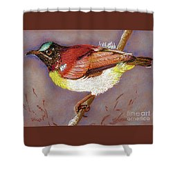 Purple Rumped Sunbird Shower Curtain