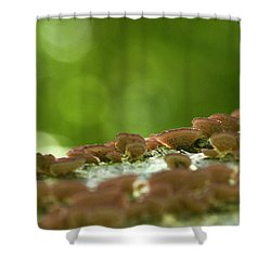 Purple Shelf Fungi Shower Curtain