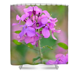 Purple Star Phlox Shower Curtain