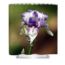 Shower Curtain featuring the photograph Purple Striped Bearded Iris by Sheila Brown