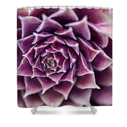 Shower Curtain featuring the photograph Purple Succulent Plant Blossom In Summer by Jingjits Photography