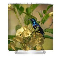 Purple Sunbird Shower Curtain