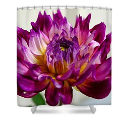 Shower Curtain featuring the photograph Purple Sunset Flower 1 by Marianne Dow