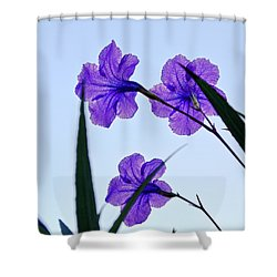 Purple Trio Shower Curtain by Christopher Holmes