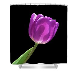 Purple Tulip 3 Shower Curtain
