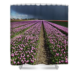 Purple Tulips Field Shower Curtain