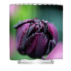 Purple Tulip Shower Curtain