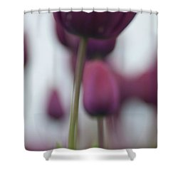 Purple Tulips Abstract Shower Curtain by Jani Freimann