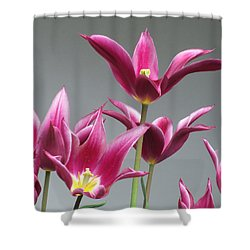 Purple Tulips Shower Curtain by Helen Northcott