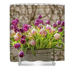 Shower Curtain featuring the photograph Purple Tulips In A Bucket by Patricia Hofmeester
