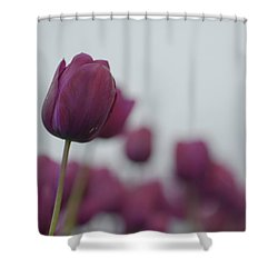 Purple Tulips Shower Curtain by Jani Freimann