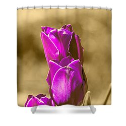 Purple Tulips Sepia Background Shower Curtain