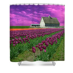 Purple Tulips With Pink Sky Shower Curtain