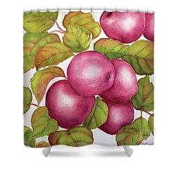 Purple Variety Shower Curtain