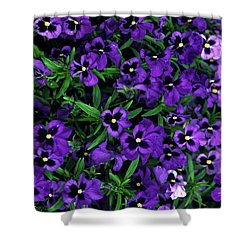 Purple Viola Flowers Shower Curtain by Sally Weigand