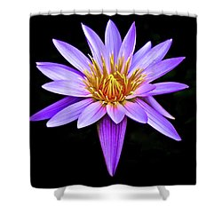 Purple Waterlily With Golden Heart Shower Curtain by Venetia Featherstone-Witty