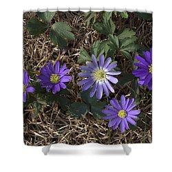Purple Yard Flowers Shower Curtain by Liz Allyn