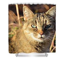 Purr-fect Kitty Cat Friend Shower Curtain