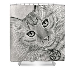 Shower Curtain featuring the drawing Purrfect Page Of Pentacles - Tarot Card Art by Carrie Hawks